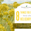 Blog 8 Things You Didn't Know About Helichrysum Header US