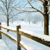 Winter Scene 88043 1920x1200