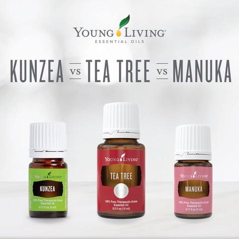 Kunzea Vs Tea Trea Vs Manuka